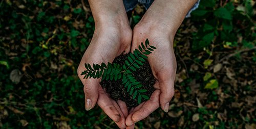 baumprojekt_pflanzen